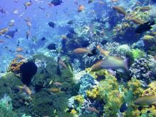 Красивейшие кораллы вокруг острова Ломбок в Индонезии и их обитатели.