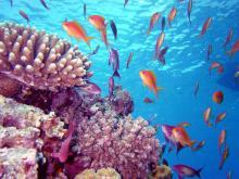 Кораллы в Шарм Эль Шейх