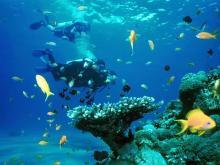 В красном море около побережья Израиля расположены одни из самых красивых коралловых рифов