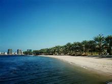 Пальмы в парке на тихой набережной в Эмиратах