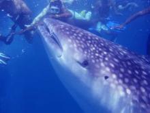 Подводный мир Мальдив в сезон дождей предстает во всей красе
