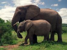 Экзотические туры в Африку. Сафари